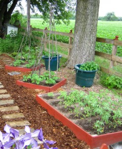 Vertical pole beans, potatoes in containers, tomatoes in square foot bed.