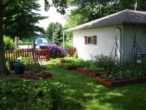 Another view of our raised bed garden